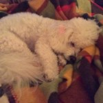 Sugar is ready for a snooze – Fun Features