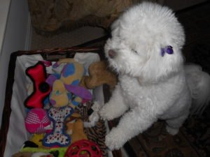 sugar looking at toy basket