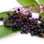 Elderberry Recipes – #fanfun